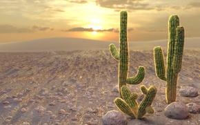 Wallpaper sunset, stones, yellow, the sun, cacti, orange, barb, desert