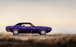 Picture Dodge Challenger, muscle car, 1970, lunchbox photoworks