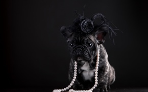 Picture dog, puppy, pearl, beads, French bulldog