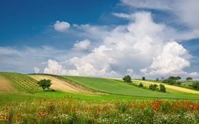 Picture summer, clouds, flowers, field, Austria, meadow