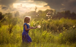 Picture field, summer, the sun, girl
