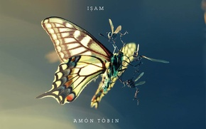 Picture insects, fight, moth, amon tobin