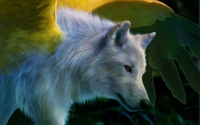 Picture white, wings, Wolf, art, pink eye, novawuff