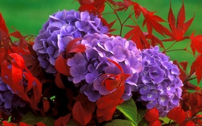 Picture leaves, bouquet, petals