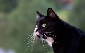 Picture eyes, cat, mustache, profile