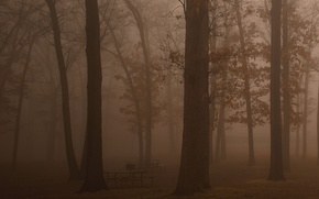 Picture beauty, morning, stay, fog, trees, freedom, benches, freshness, haze, forest, darkness