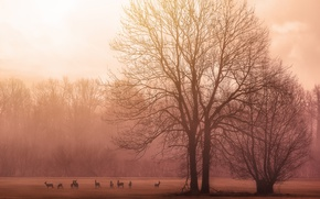 Picture trees, birds, morning, sunrise, dawn, branches, deer, wildlife, foggy, stove