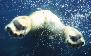 Wallpaper VIEW, BACK, BUBBLES, WHITE, WATER, SWIMMING), BEAR, AIR, PAWS