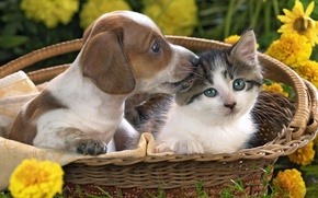 Picture flowers, basket, Kitty, puppy