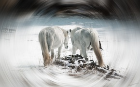 Picture horses, trees, horse, snow, white