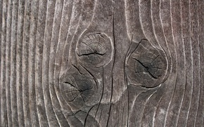 Wallpaper tree, texture, bitches