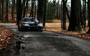 Picture Macro, Road, Autumn, Forest, Toyota, Supra, 1993, Toyota, Supra, GTE, Targa, A80, Erset, Targa