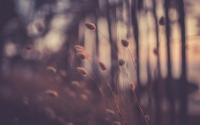 Picture grass, macro, the evening, bokeh