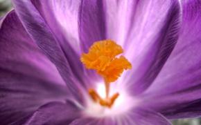 Picture flower, macro, petals, 150