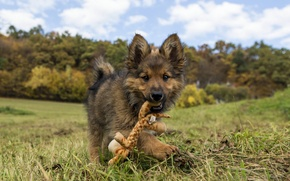 Picture toy, dog, puppy