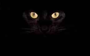 Picture Look, Cat, Mustache, Cat, Eyes, Black
