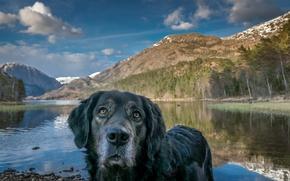 Picture look, landscape, each, dog