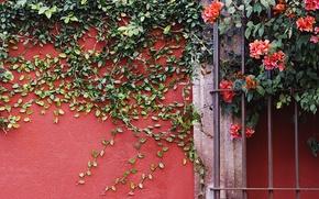 Wallpaper flowers, wall, plant, vines
