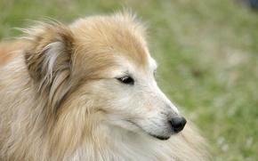 Picture portrait, beauty, dog
