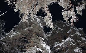 Picture winter, snow, night, pine