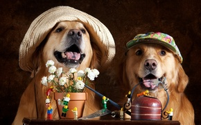 Wallpaper flowers, hats, dogs