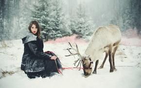 Picture winter, girl, deer
