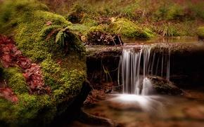 Picture stream, moss, Switzerland, Switzerland, Fällanden, Fällanden