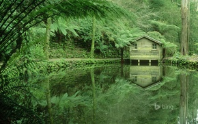Picture forest, trees, lake, thickets, Victoria, Australia, house, Dandenong