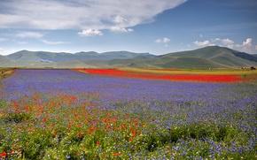 Picture field, flowers, hills, Maki