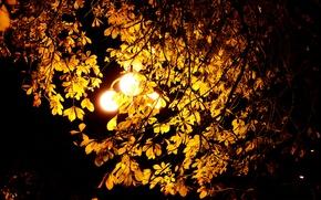 Picture autumn, leaves, light, night, Wallpaper, lantern, chestnut