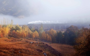 Picture autumn, forest, trees, fog, train, haze