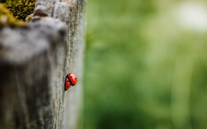 Wallpaper summer, nature, ladybugs