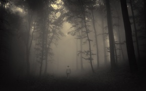 Picture road, sadness, forest, trees, landscape, nature, forest, misty, road, trees, landscape, nature, sadness, creepy, creepy, …