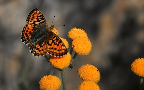 Picture flowers, butterfly