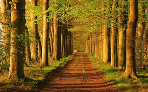 Picture road, greens, light, trees, alley