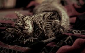 Picture heat, blanket, sleeping, Kote, cozy