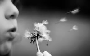 Picture background, dandelion, child