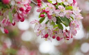 Picture tree, beauty, spring, flowering