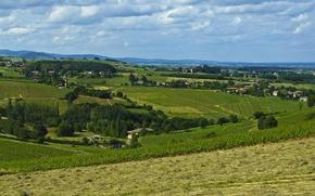 Picture nature, Field, vineyard, field, nature, vineyard