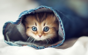 Picture cat, eyes, cat, kitty, jeans, bed, Halacha