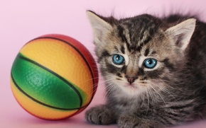 Picture toy, the ball, kitty