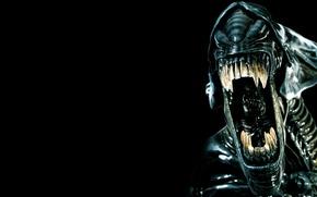 Picture Alien, head, creature, teeth