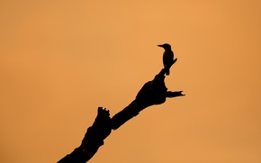 Picture background, tree, bird