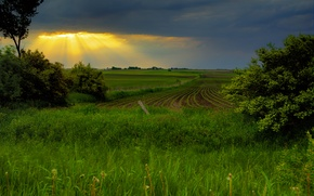 Picture field, the sky, sunset, spring