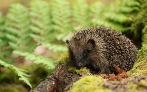 Wallpaper bokeh, moss, hedgehog
