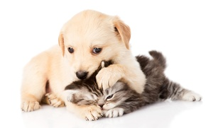 Picture kitty, pair, puppy, puppy, play, kitten, couple