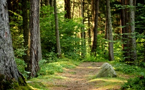 Picture forest, summer, nature, trail
