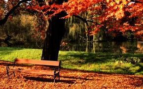 Wallpaper tree, autumn, Park, shop, pond
