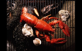 Picture grille, Lobster, oysters