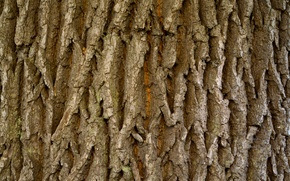 Picture dark, wood, tree, Brown, natural